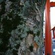 :赤城神社